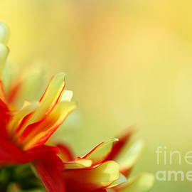 Dancing in the Sunlight by Beve Brown-Clark Photography
