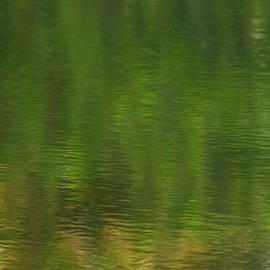 Dancing Reeds  by John F Tsumas