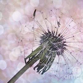 Dandelion before Pretty Bokeh by Kaye Menner