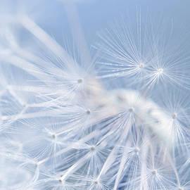 Dandelion Fly Away Blue by Jennie Marie Schell