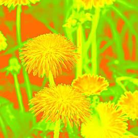 Dandelions by Lali Kacharava