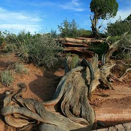 Dead Horse Point Tree 1 by Mo Barton