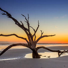 Dead Tree Sunset by Pierre Leclerc Photography