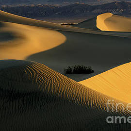 Death Valley California Gold 1 by Bob Christopher