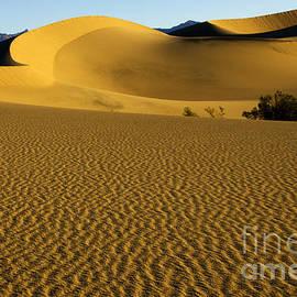 Bob Christopher - Death Valley California Gold 3