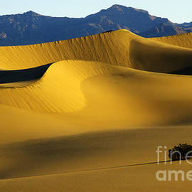 Death Valley California Gold 6 by Bob Christopher