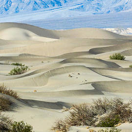 Death Valley National Park - Mesquite Sand Dunes II by Patti Deters