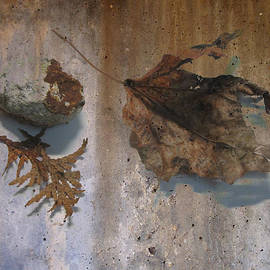 Decayed Leaf Still Life On Concrete 2 by Anita Burgermeister