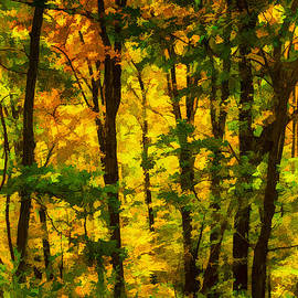 John Haldane - Deep in the Woods of the Great Smoky Mountains National Park