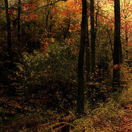 Nina Fosdick - Deep Inside The Woods