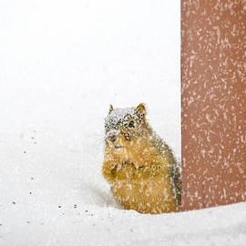 LeeAnn McLaneGoetz McLaneGoetzStudioLLCcom - Deep SNOW