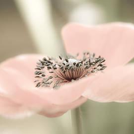 Julie Palencia - Delicate Anemone