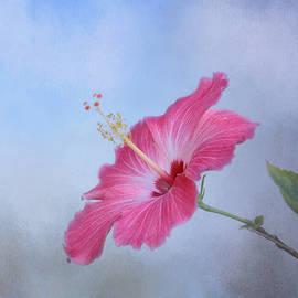Delicate Beauty by Kim Hojnacki
