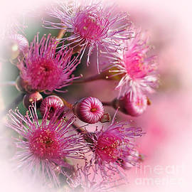 Delicate Buds and Blossoms by Kaye Menner