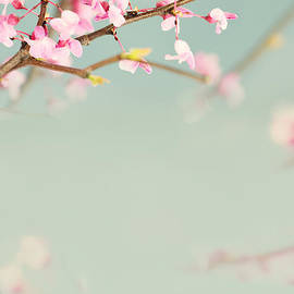 Delicate Spring by Stephanie Frey