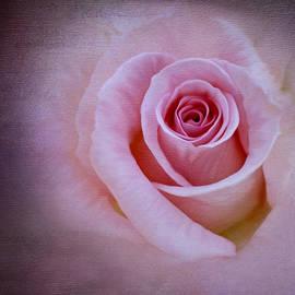 Ivelina G - Delicately Pink