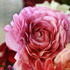 Joan Bertucci - Delightful