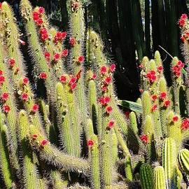 Savanna Paine - Desert Love