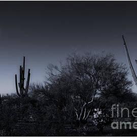 Desert Moon by Bob Hislop