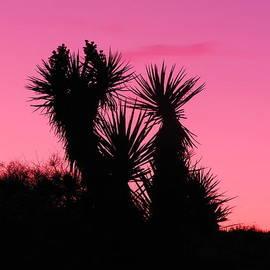 James Welch - Desert Pink