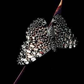 Designs On My Wings by Ruth Jolly