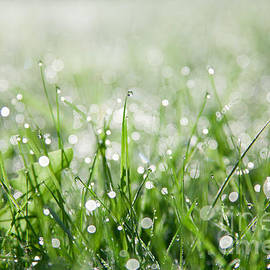 Dew Drenched Morning by Jan Bickerton