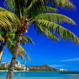 Diamond Head - A sunny day on Oahu with a view of Diamond Head by Nature  Photographer