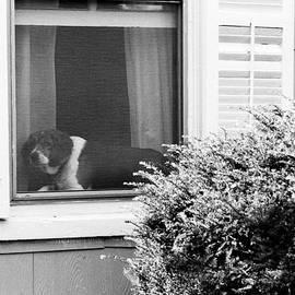 Dog In Window by Harold E McCray