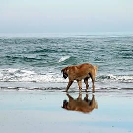 Cynthia Guinn - Dog Walking