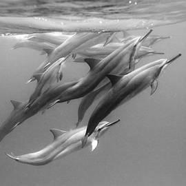 Sean Davey - Dolphin Pod