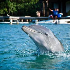 Zina Zinchik - Dolphin