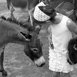 Brooke T Ryan - Donkey Whisperer