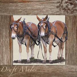 BETHANY CASKEY - Draft Mules