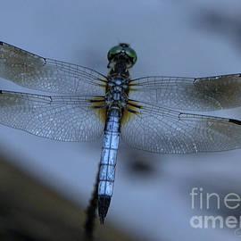 Dragon Fly by John Zawacki