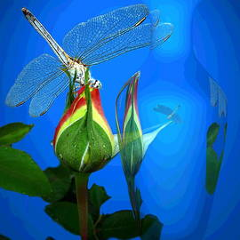 Dragonfly And Bud On Blue by Joyce Dickens