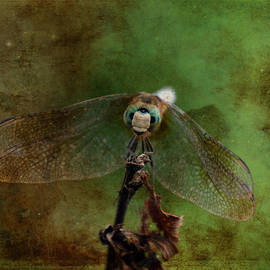 Lesa Fine - Dragonfly Blue Dasher Antiqued