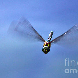 Janice Rae Pariza - Dragonfly Bomb Dive