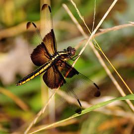 Dragonfly by John Johnson