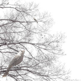 Julie Magers Soulen - Dreamy Black and White Bird in Bare Tree Branches
