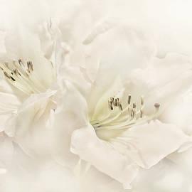 Dreamy Ivory White Azalea Flowers by Jennie Marie Schell