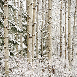 Idaho Scenic Images Linda Lantzy - Dressed in White