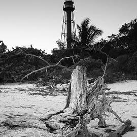 Driftwood and Lighthouse by Steven Ainsworth