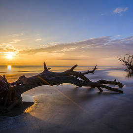 Driftwood Beach at Sunrise by Debra and Dave Vanderlaan