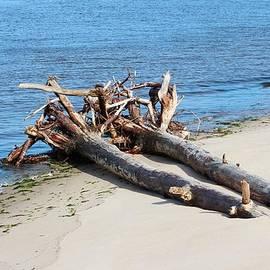 Cynthia Guinn - Driftwood