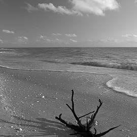 Driftwood by Juergen Roth