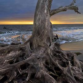 Driftwood on Jekyll Island by Debra and Dave Vanderlaan