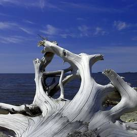 Tim Beebe - Driftwood on Superior
