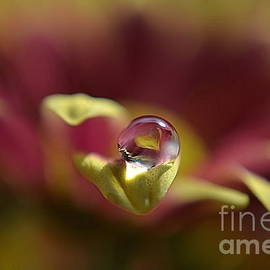 Drop On Petal by Michelle Meenawong