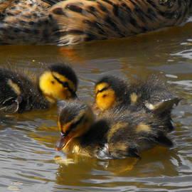 Perggals - Stacey Turner - Duckling splash