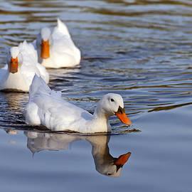 George Atsametakis - Ducks